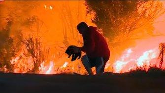 Мужчина спас обгоревшего волчонка из лесного пожара, спустя год хищник вернул долг человеку...